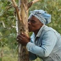 Msendo Woodlot Nombeko Buyana