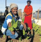 Minet 'Rastar' Nojoko assists 50 families with vegetable gardening with funds he raises himself