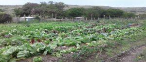 Hobeni Village Gardens